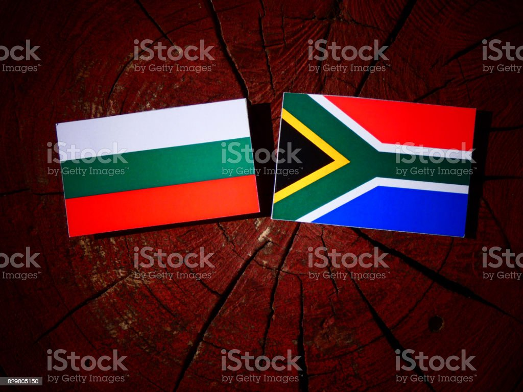 Bulgarian flag with South African flag on a tree stump isolated stock photo