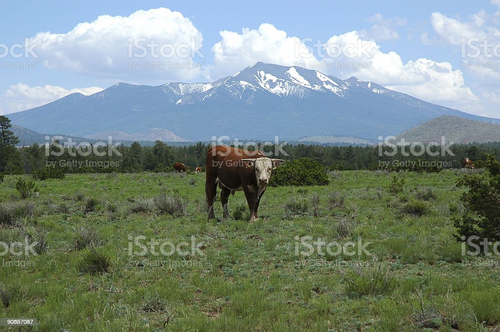 Bull and Mountain royalty-free stock photo
