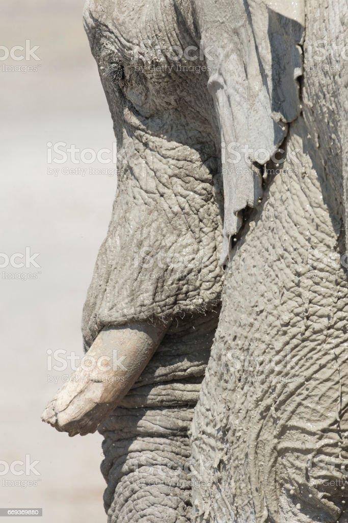 Bull Elephant in Etosha National Park. stock photo