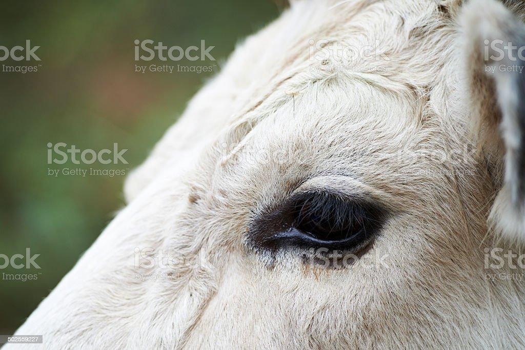 Bull Eye stock photo
