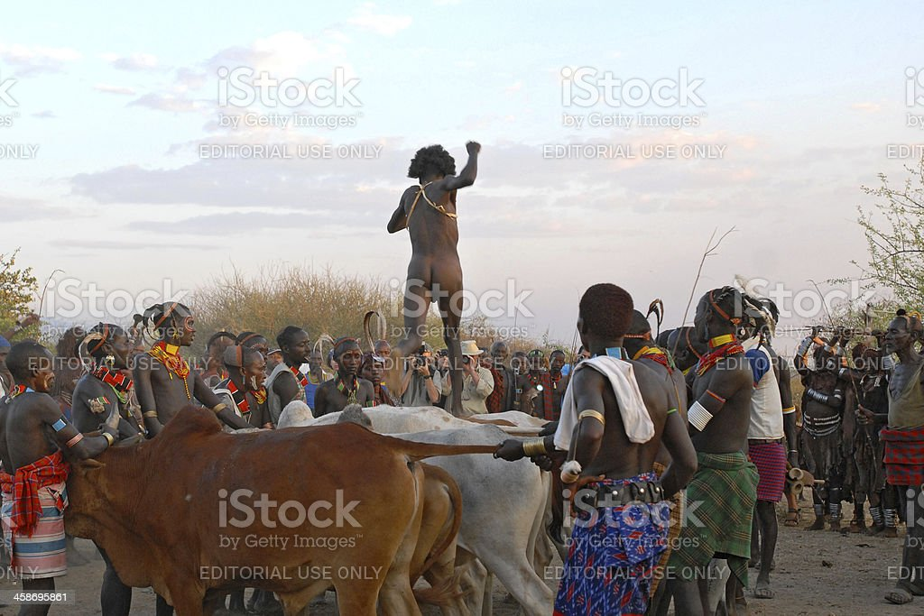 Bull jumping ceremony of the Hamar people, Ethiopia royalty-free stock photo