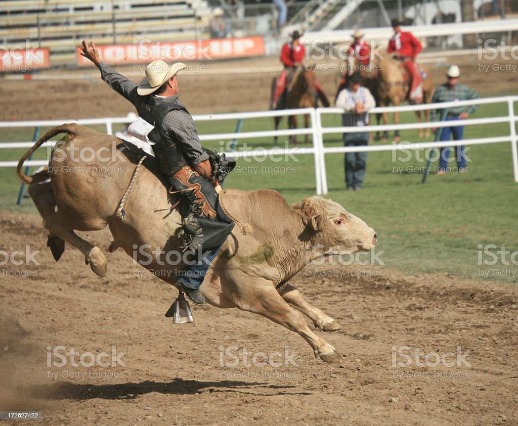 Bull rider at rodeo mid-air on dirt track stock photo