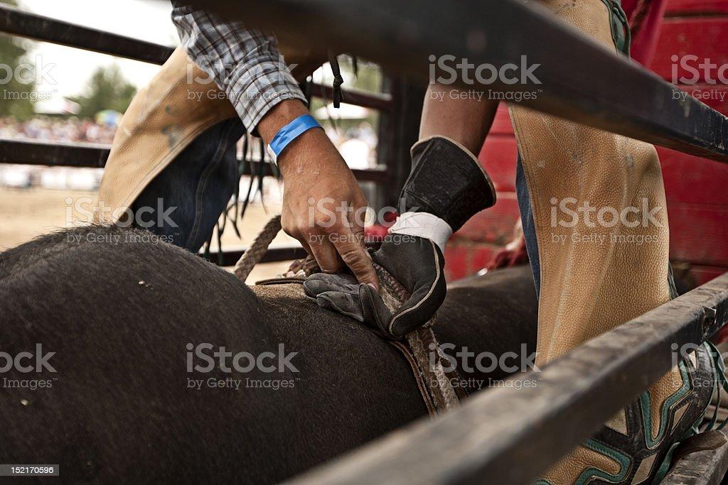 Bull Rider close up. stock photo