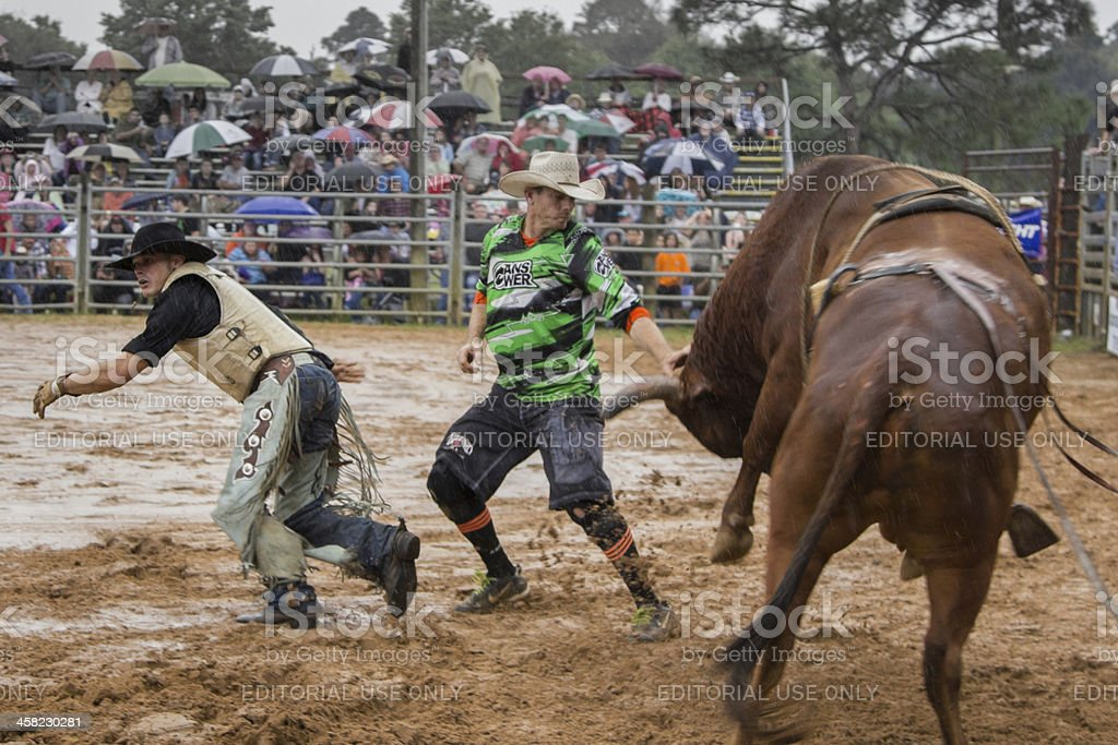Bull Rider, Rodeo Clown and Angry Beast stock photo