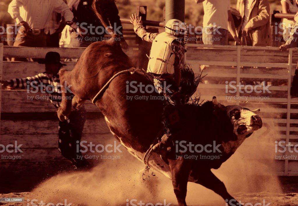 Bull Riding II (Burnt Sienna) stock photo