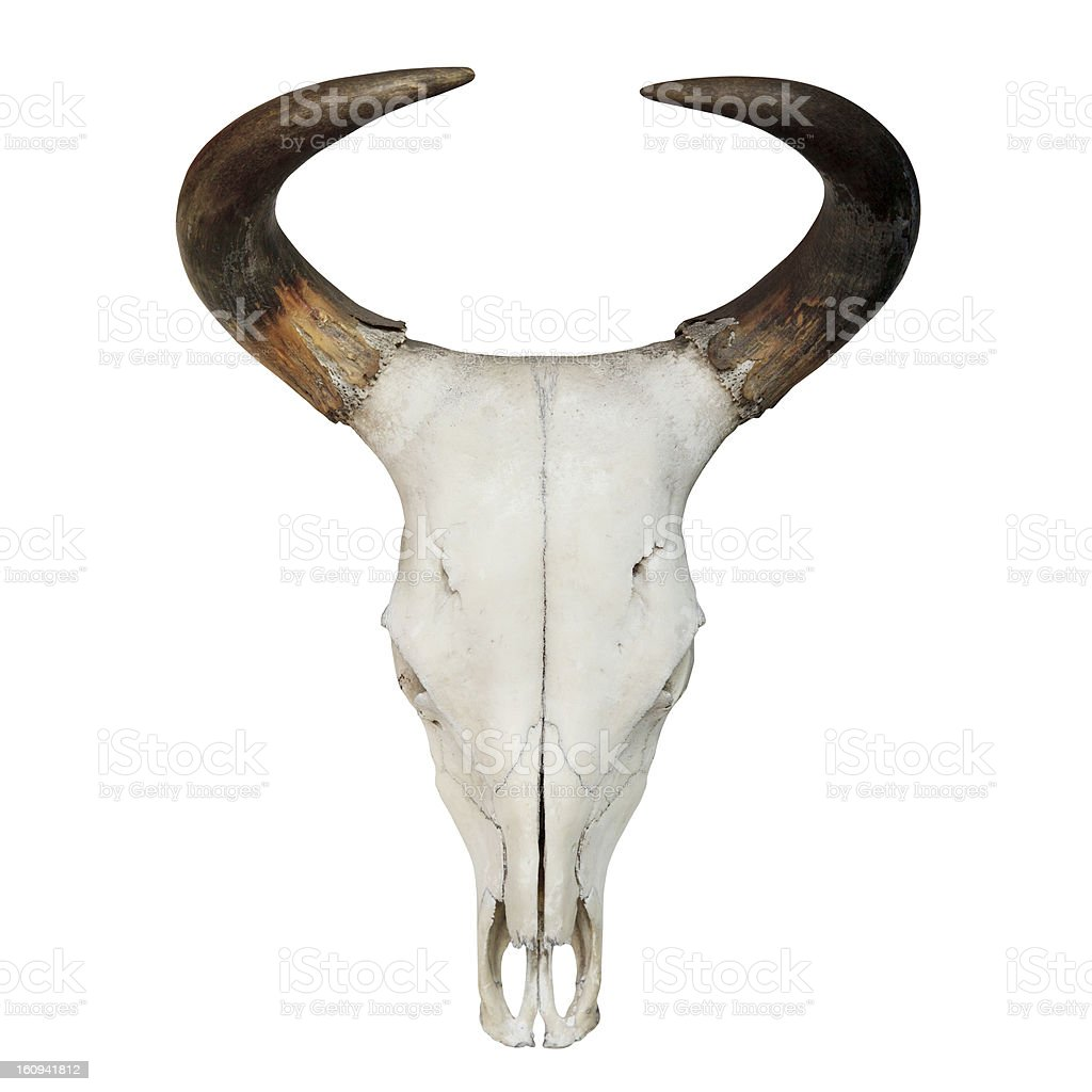 Bull Skull royalty-free stock photo