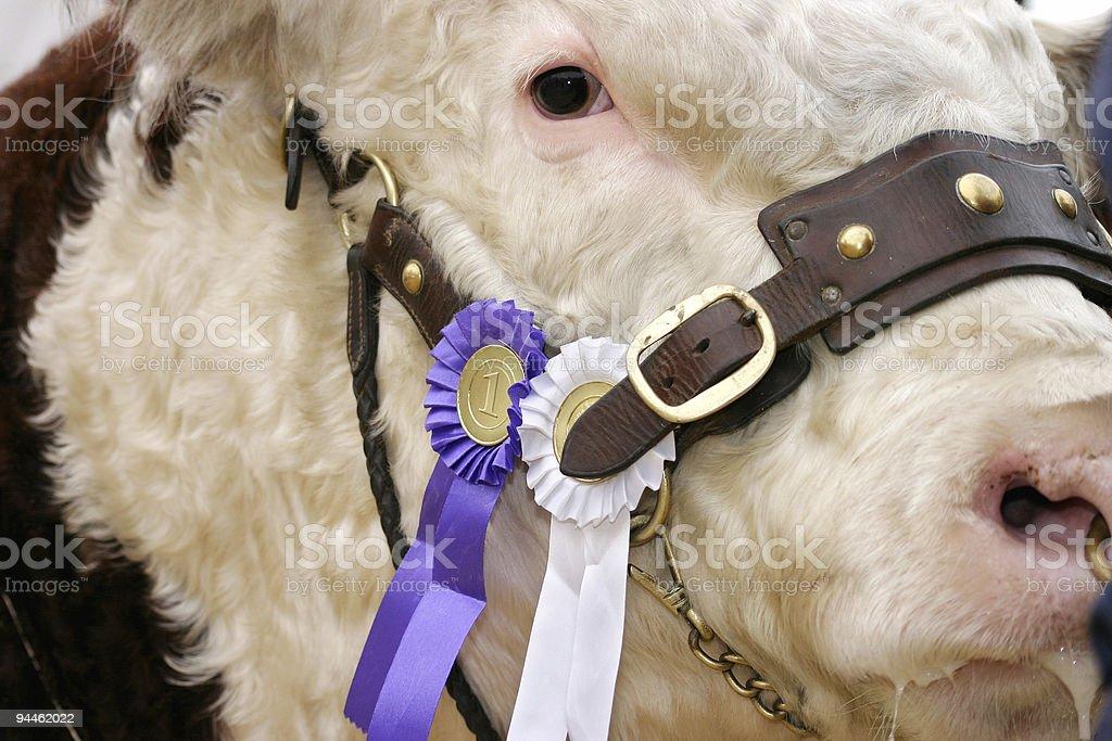 Bull the winner number one stock photo