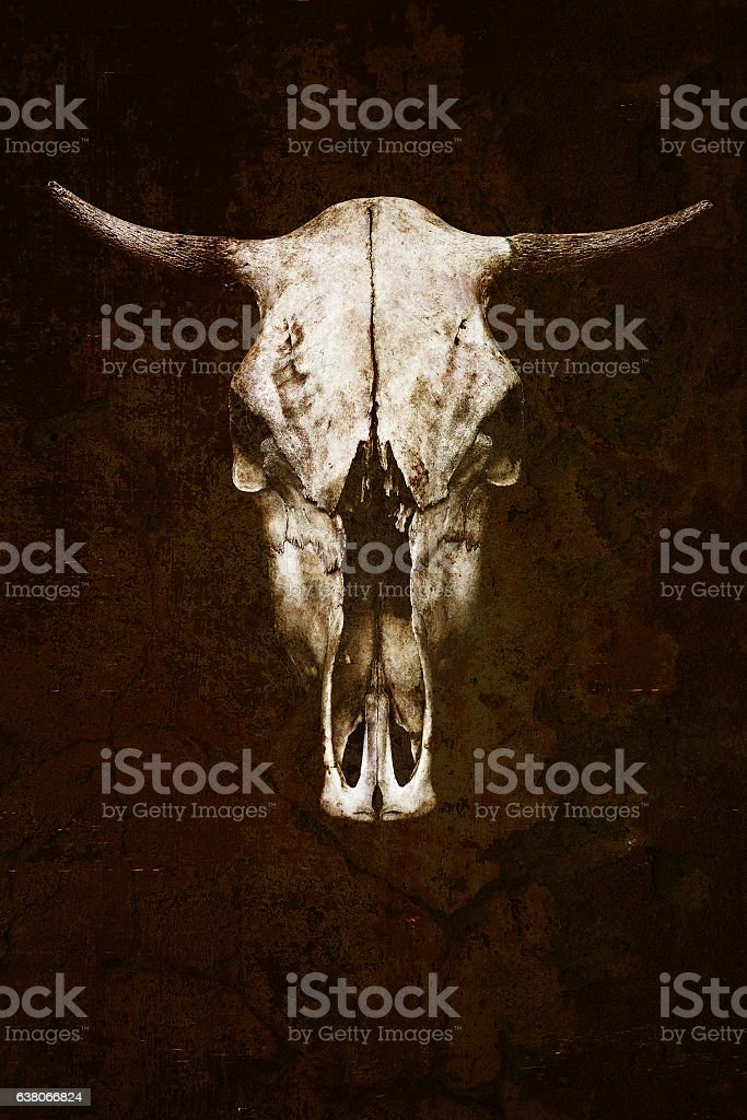 bull with horns. Trophy big horned animal closeup stock photo