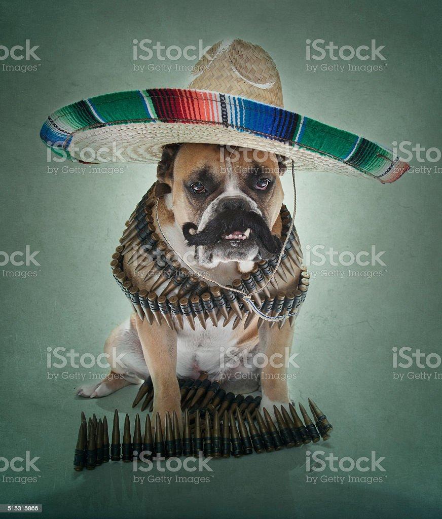 Bulldog in a sombrero and mustache portrait stock photo