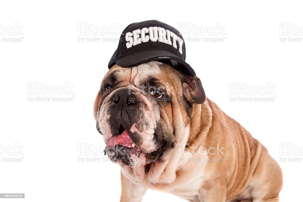 Bulldog Security Guard stock photo