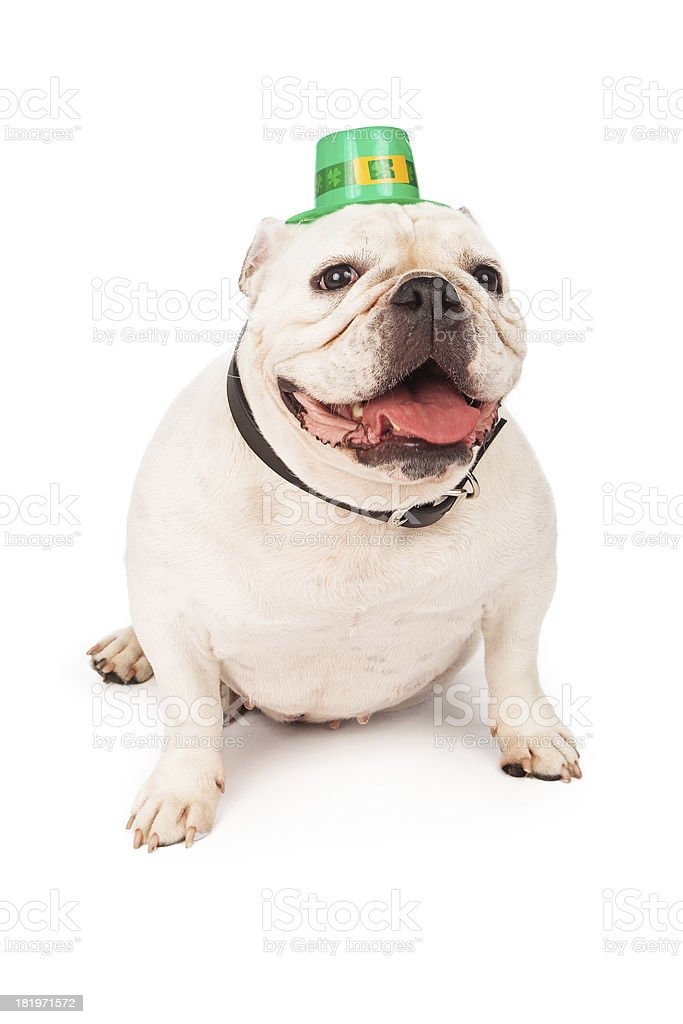 Bulldog Wearing St. Patricks Day Hat royalty-free stock photo