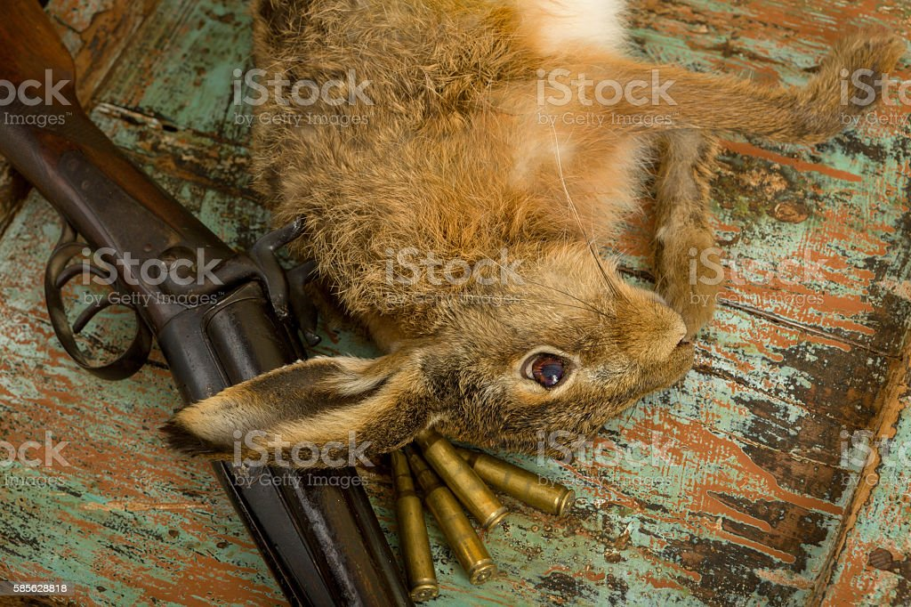 Bullets and hunting rifle stock photo