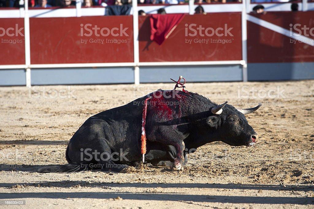 Bullfight stock photo