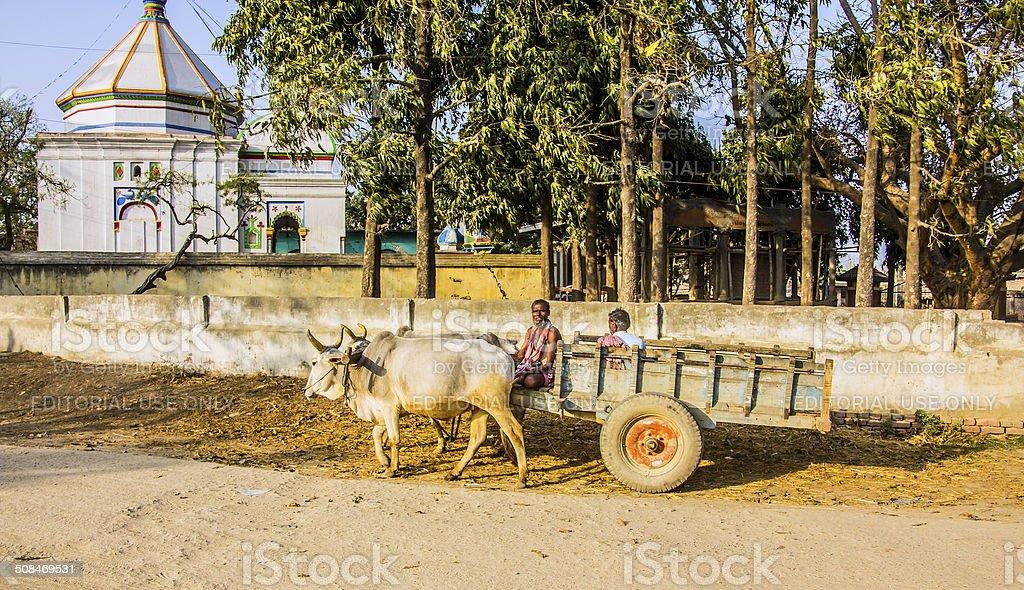 bullock cart stock photo