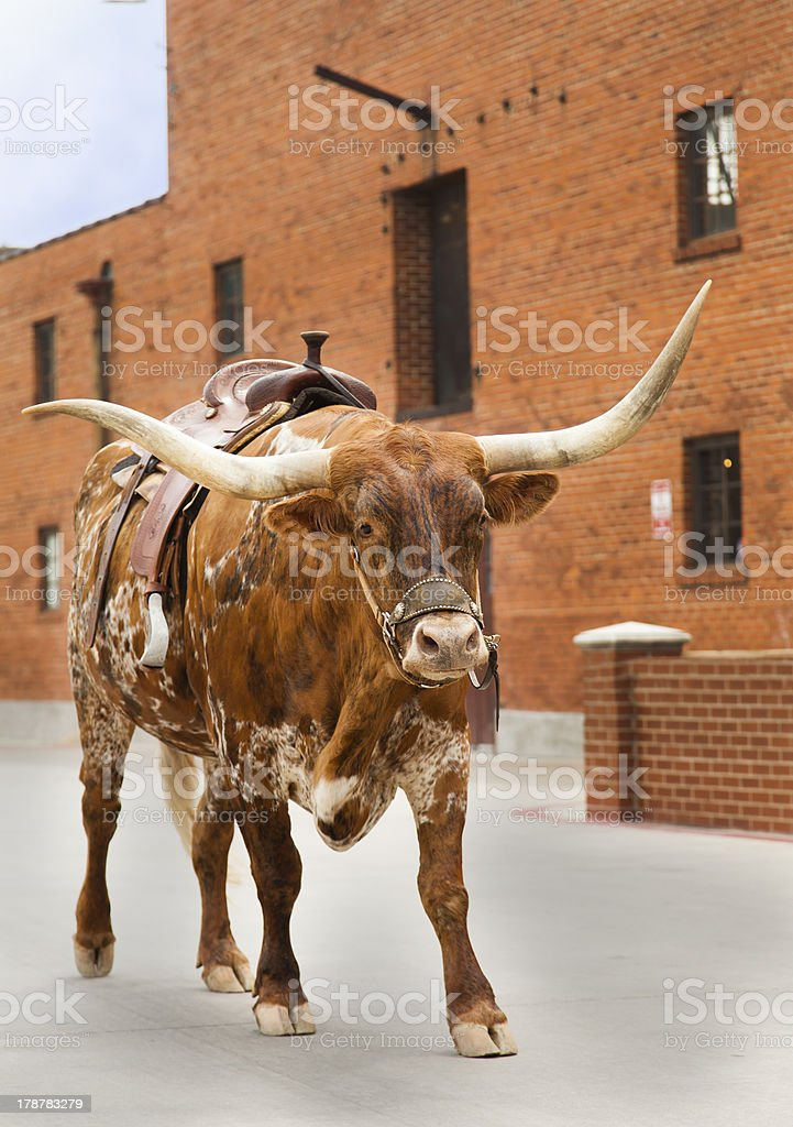 Bulltown royalty-free stock photo