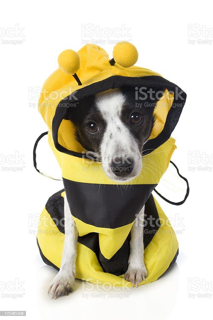 Bumble Bee Dog stock photo