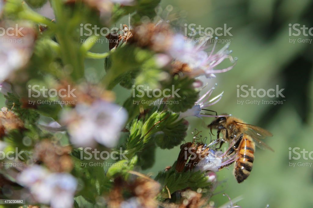 Bumble Bee Profile stock photo