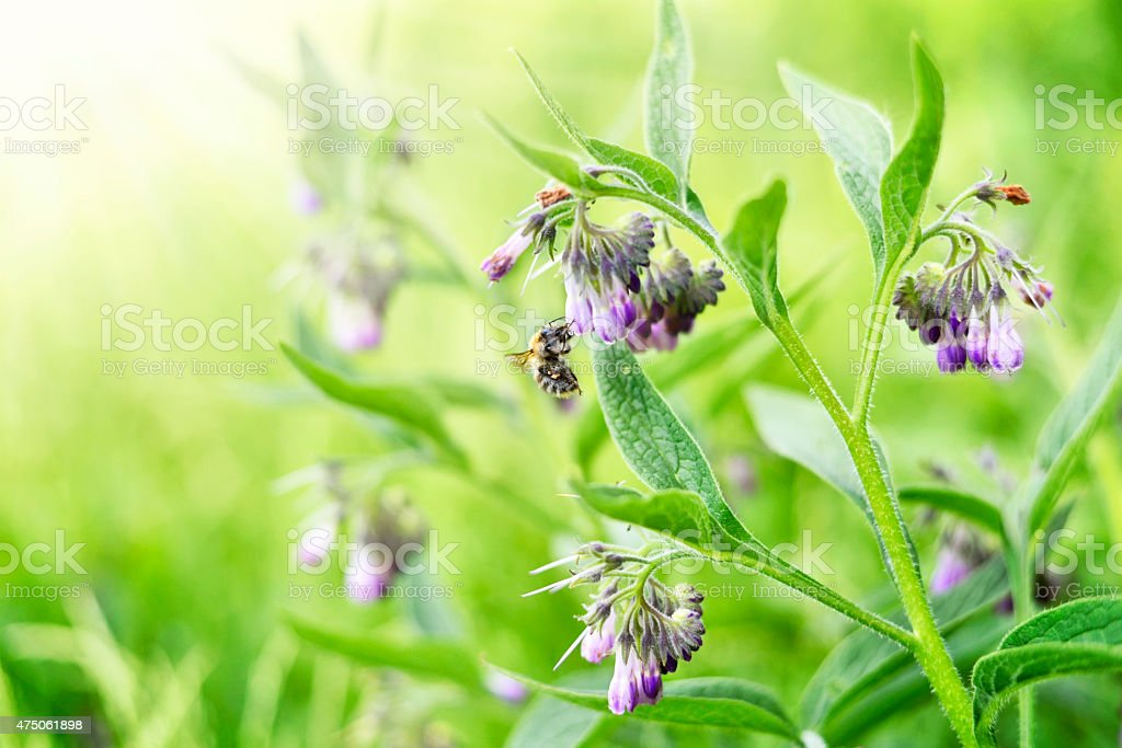 Bumblebee and wildflowers stock photo