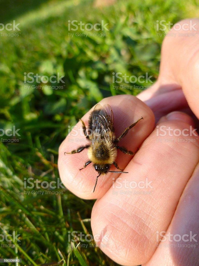 Bumblebee Stings Hand stock photo