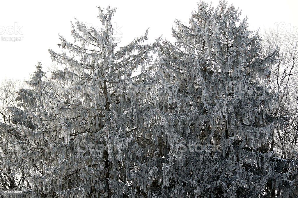 Bäume im Winter stock photo