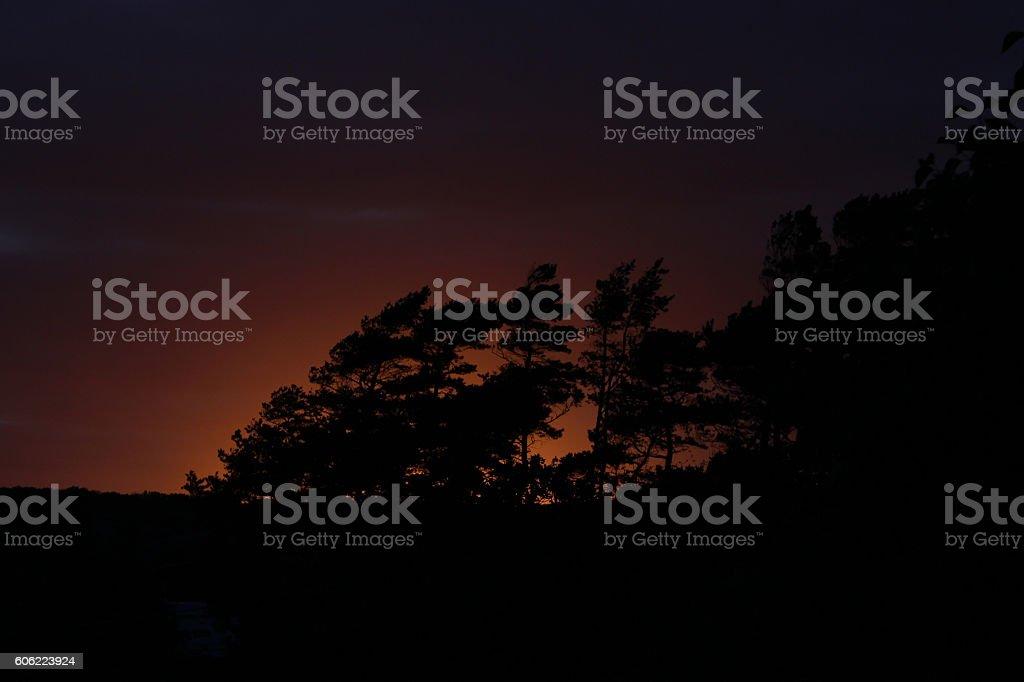 bäume stock photo