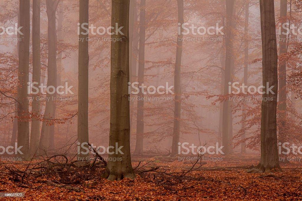 Bäume und Herbstlaub im Nebel stock photo