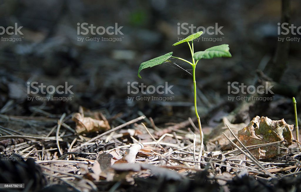 bump fir in the undergrowth stock photo