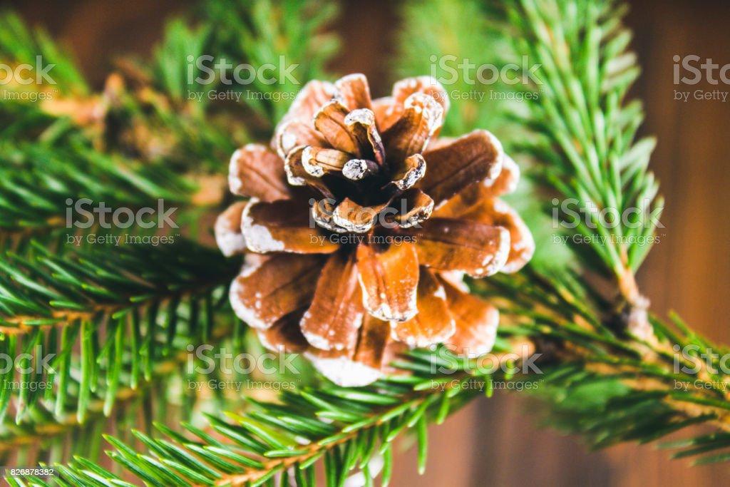 bump on the Christmas tree branch stock photo