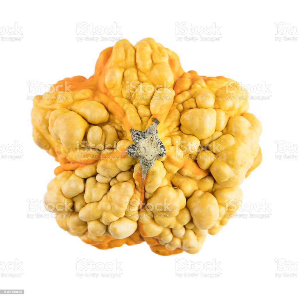 Bumpy Gourd Isolated stock photo