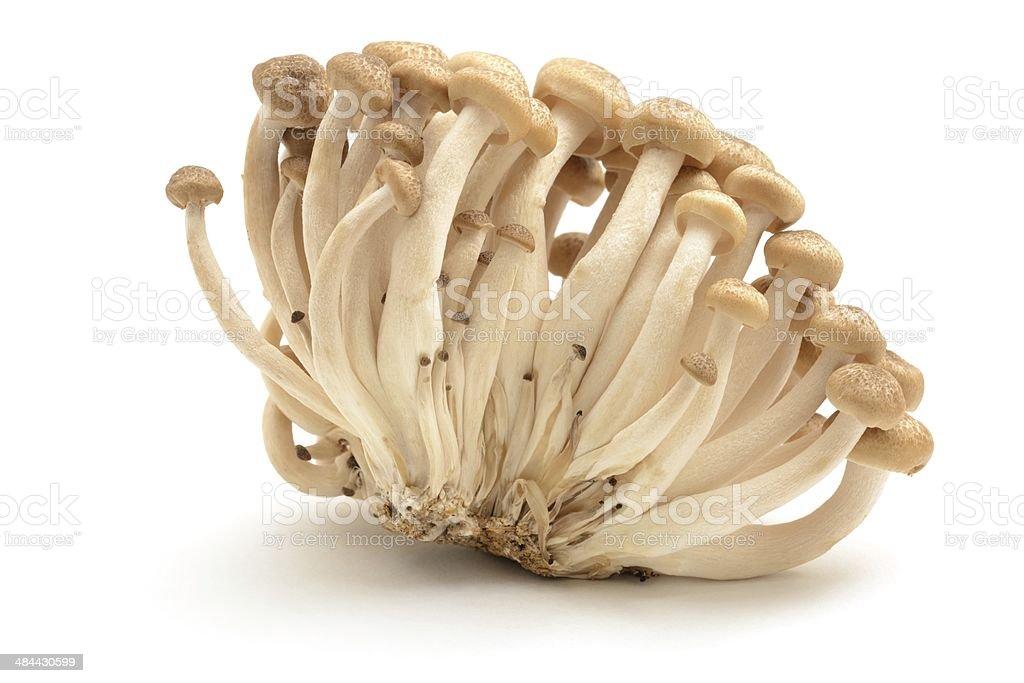 Buna Shimeji mushrooms stock photo