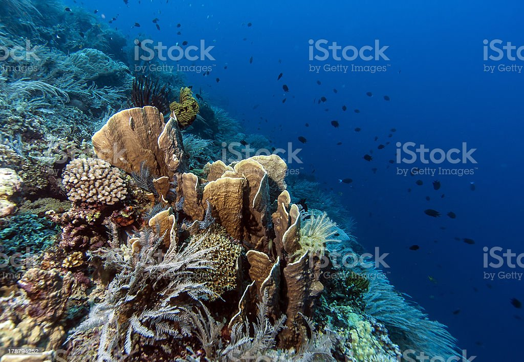 Bunaken National Marine Park.Indonesia stock photo
