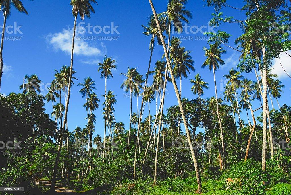 Bunaken palm trees stock photo