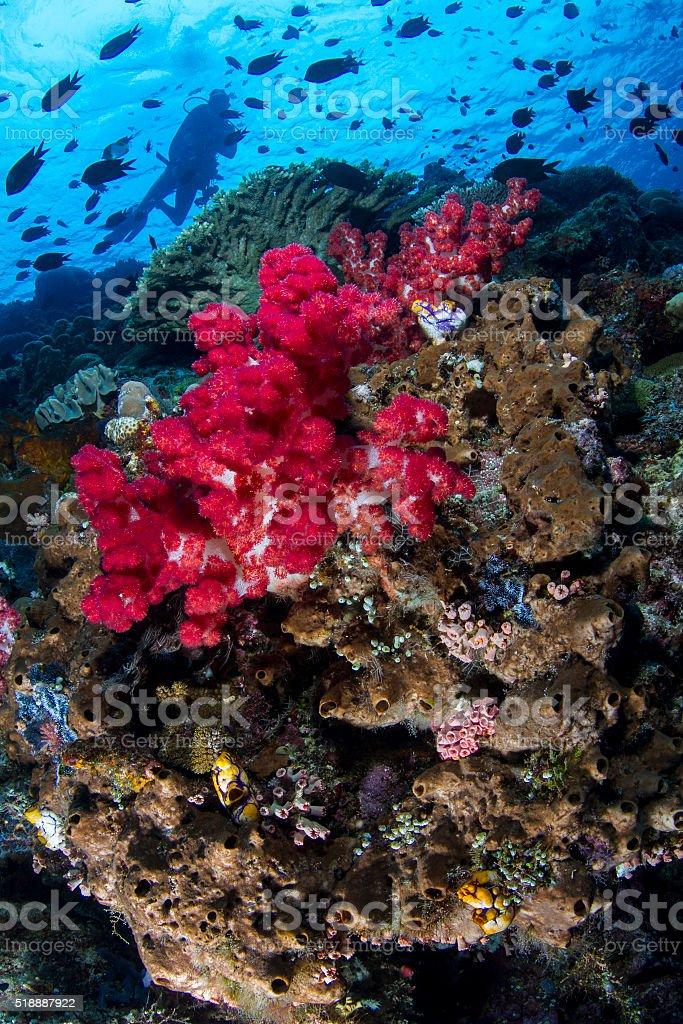 Bunaken Reef Wall stock photo