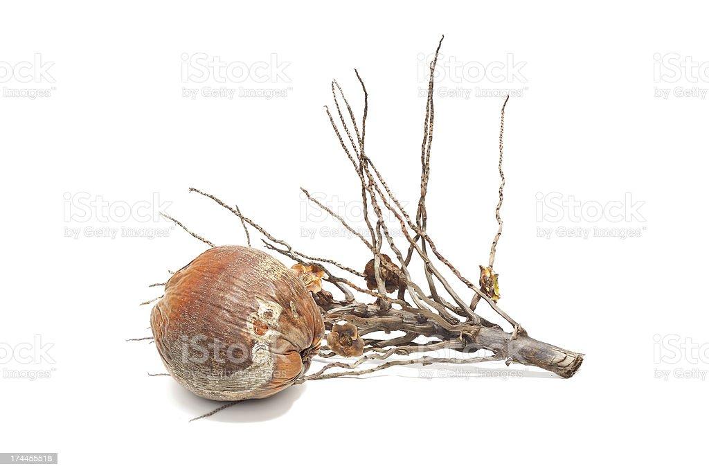 Pęk i kokosowe na białym tle zbiór zdjęć royalty-free