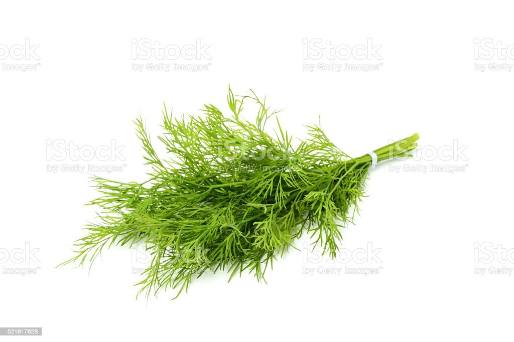 Bunch fresh dill isolated close-up. stock photo
