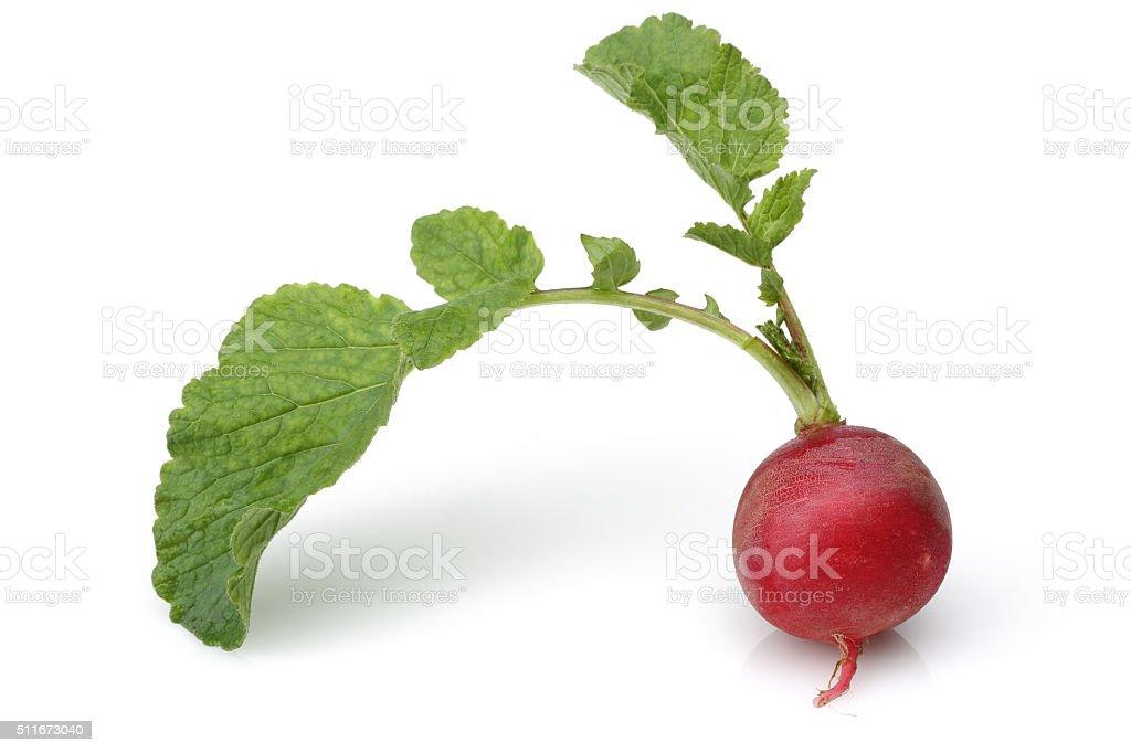 Bunch fresh radish stock photo