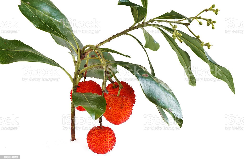 bunch of arbutus stock photo