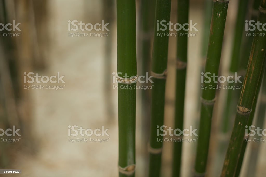 bunch of bamboos stock photo