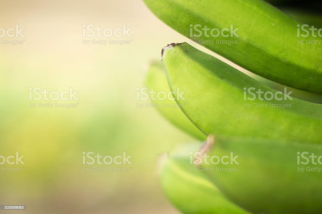 Bunch of bananas on a natural background stock photo