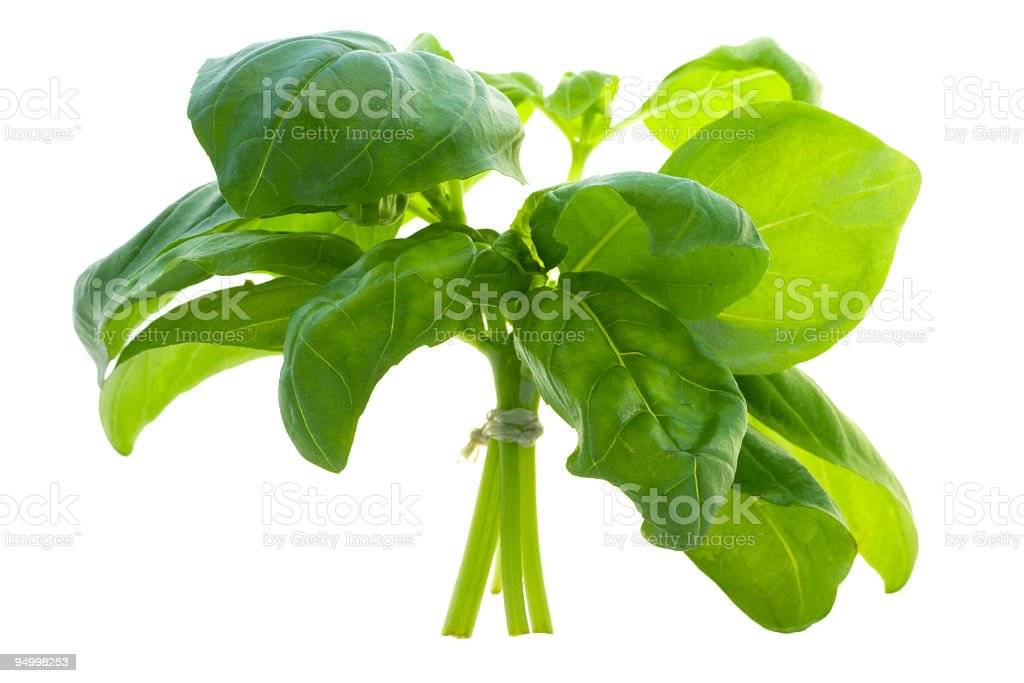 Bunch of basil royalty-free stock photo