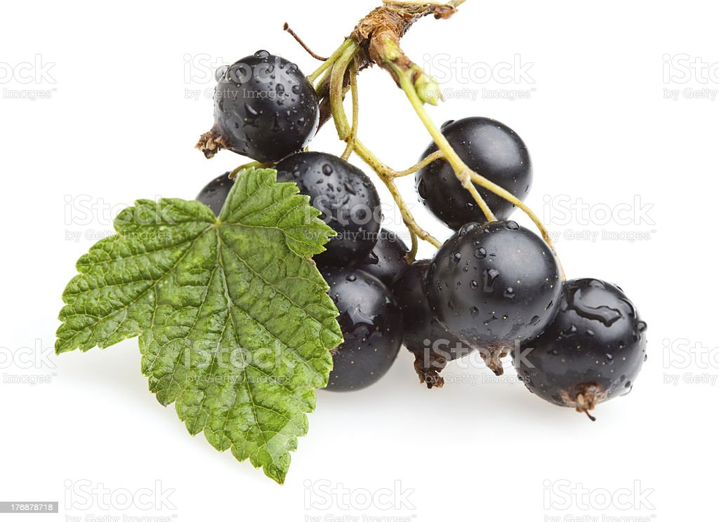 Bunch of black currant berries royalty-free stock photo