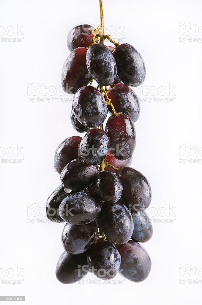 Bunch of blue Grapes stock photo