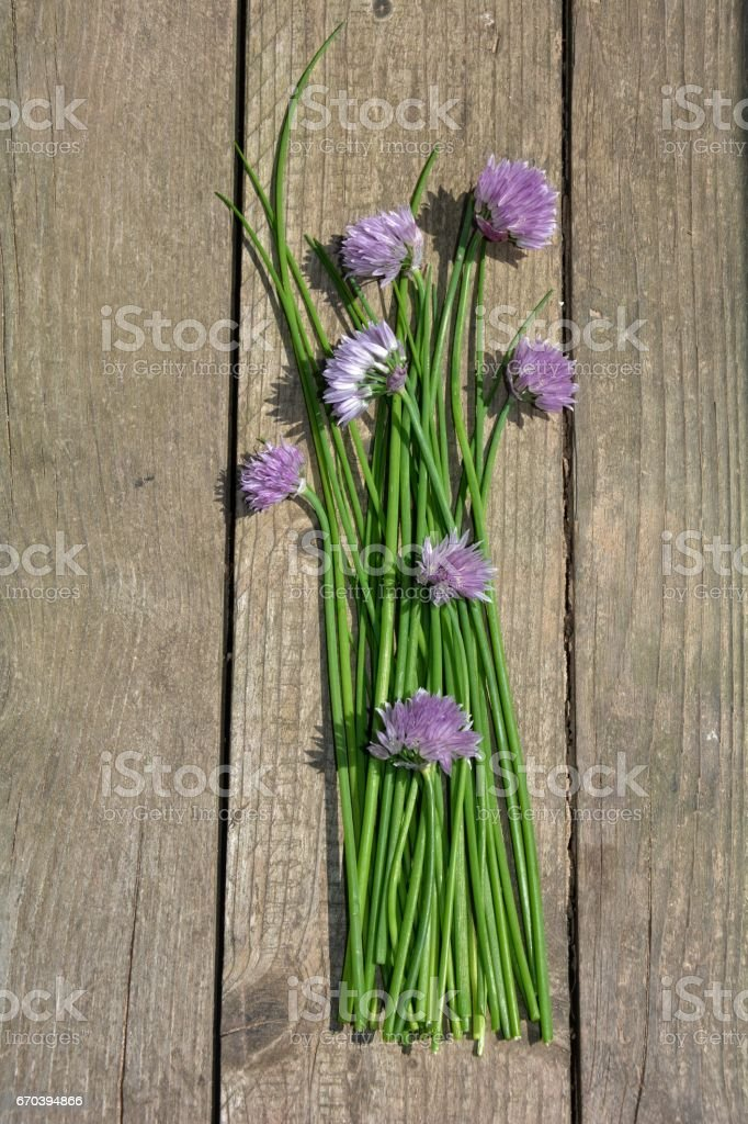 Bunch of chives with purple flowers on old wood stock photo