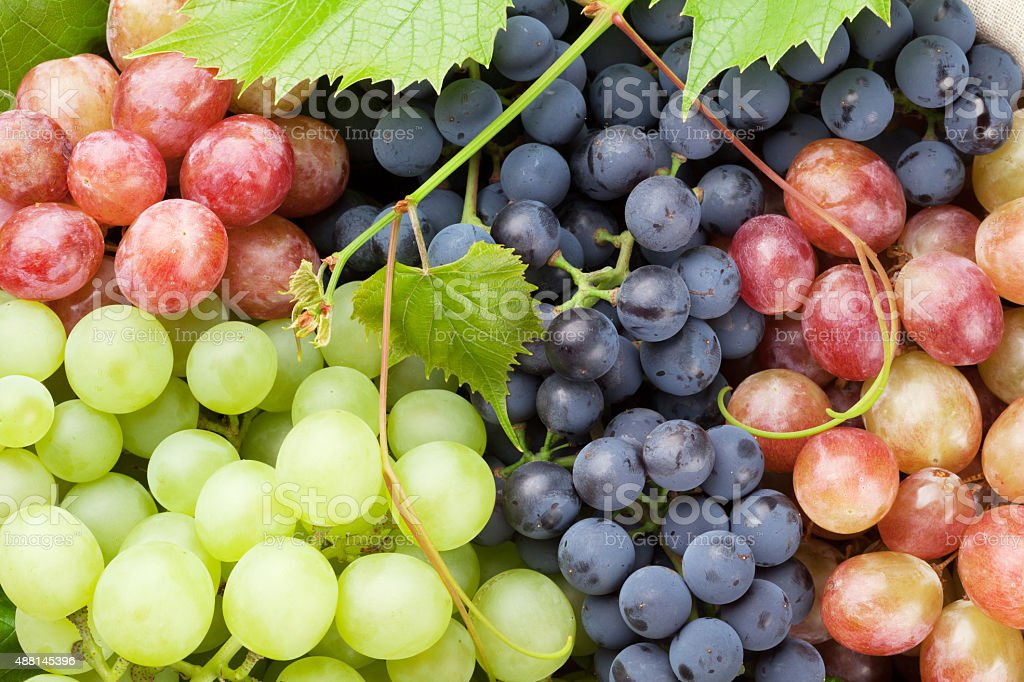 Bunch of colorful grapes stock photo