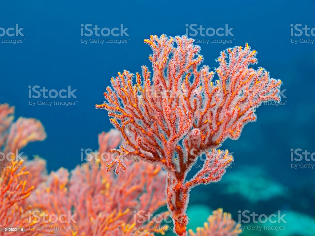 Bunch of coral polyps stock photo
