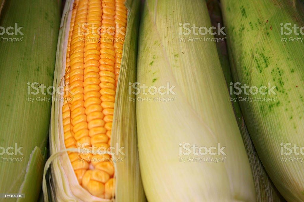 Bunch of corns royalty-free stock photo