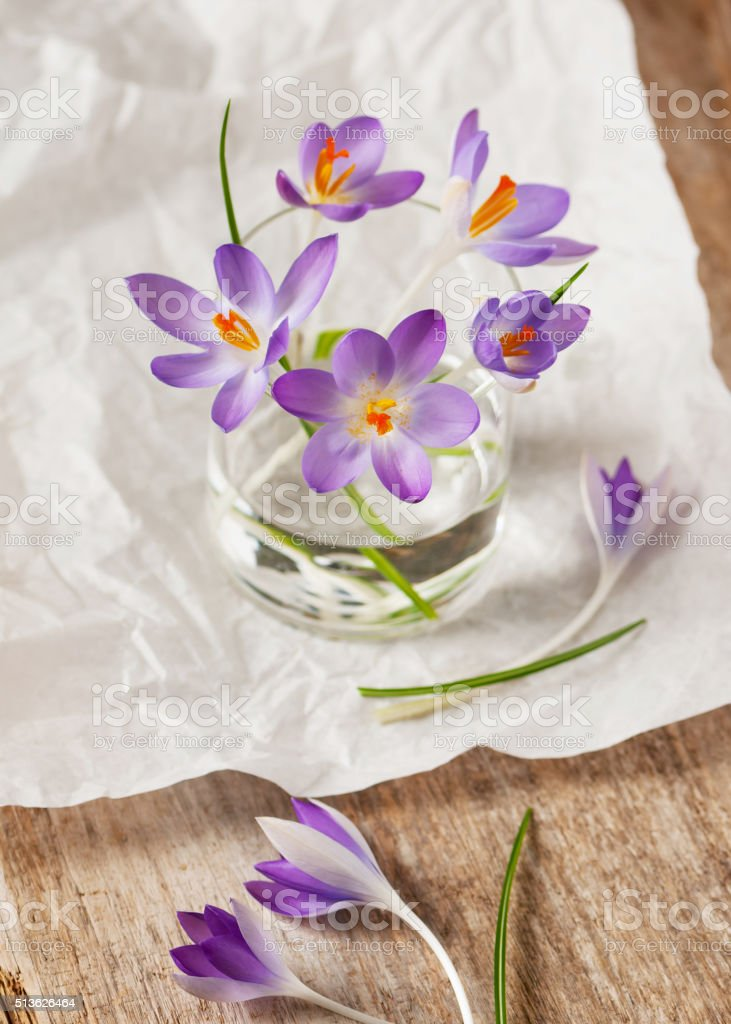 Bunch of crocuses in a water in transparent vase. stock photo