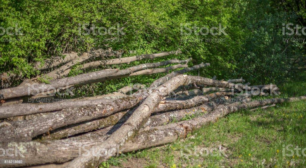 A bunch of curves fallen oak trunks stock photo