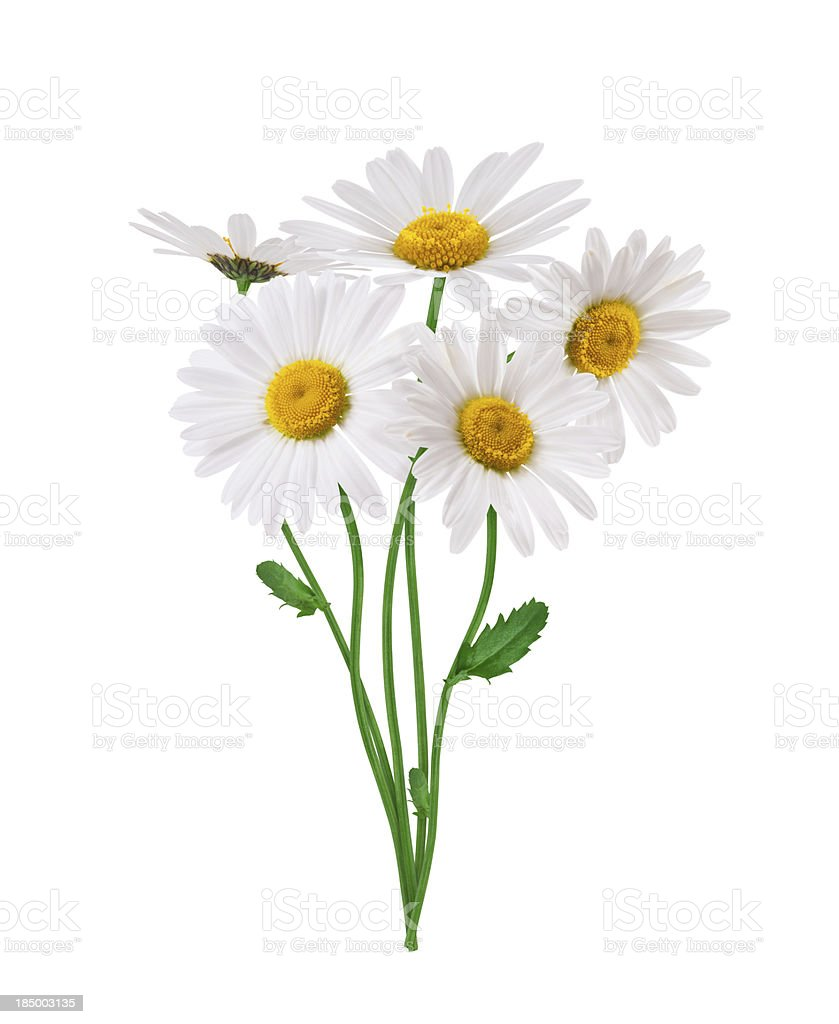 Bunch Of Daisies stock photo