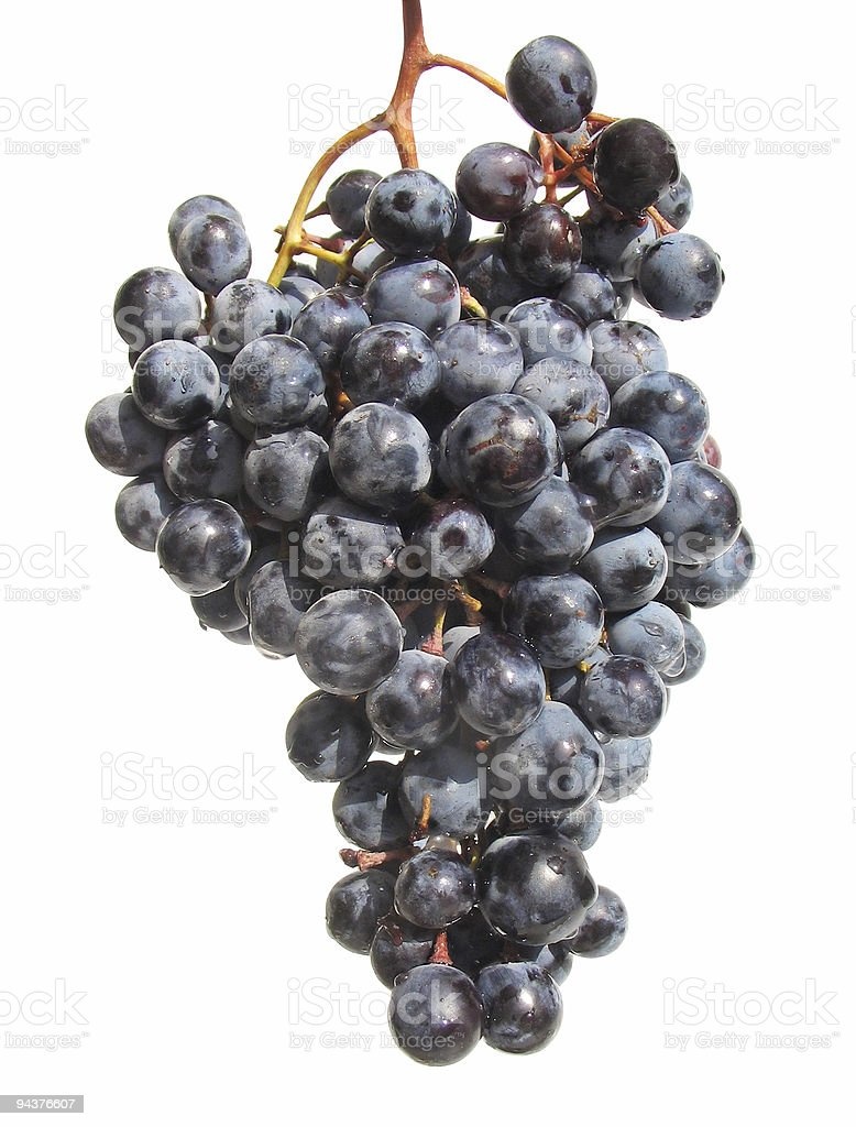 Bunch of dark grapes royalty-free stock photo
